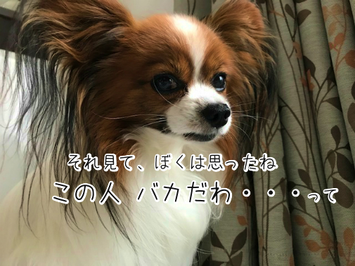 SH7wdOJi20180518-3.png