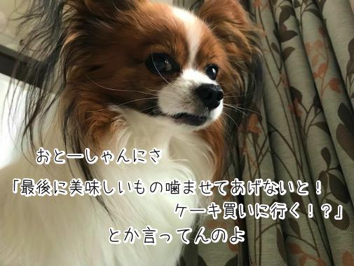 mEINRQ_l20180518-2.png