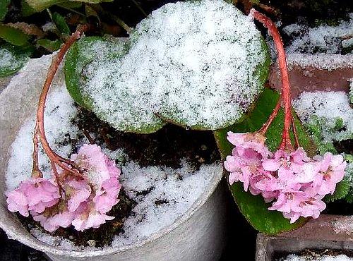 今朝の雪1