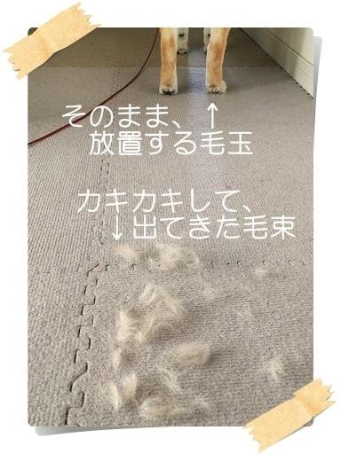 komaro20180404_12.jpg