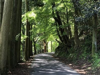 石見の銀山 (3)