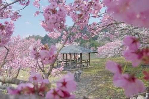 お花見の名所 月毛公園