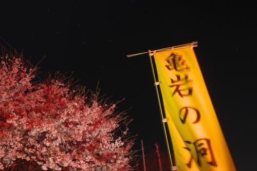 濃溝の滝 夜桜