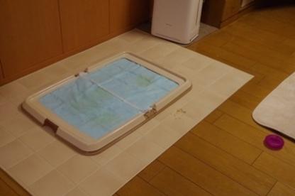 風呂上り 3