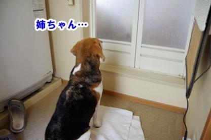 びちょびちょ 6