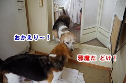 びちょびちょ 7