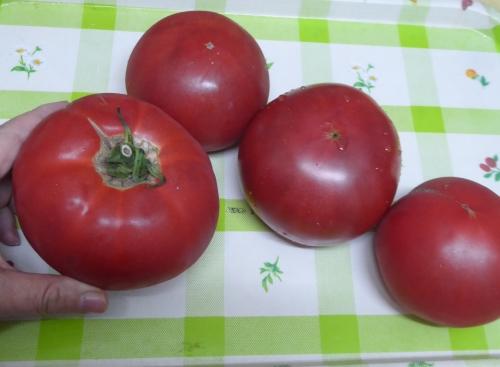 完熟トマト2018-1