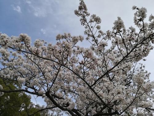 2018お花見