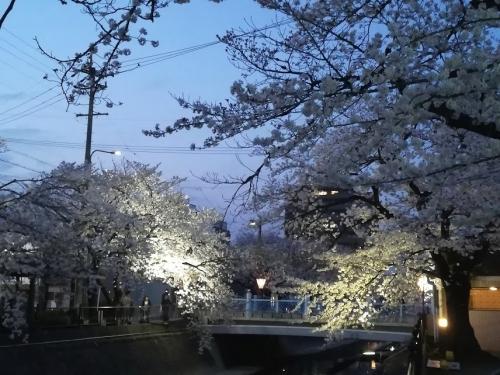2018お花見 (2)