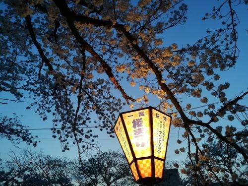 2018お花見 (1)