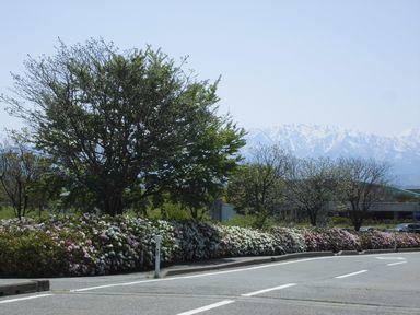 afujihana0429-9.jpg