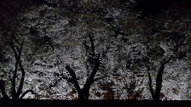 asakura0405-1.jpg