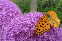 アリエムと蝶