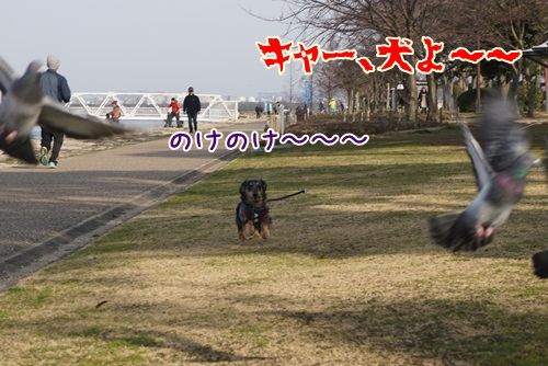 DSC04212.jpg