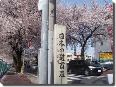mini_11_sakura_P3295970.jpg
