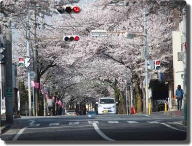 mini_14_sakura_P3295952.jpg