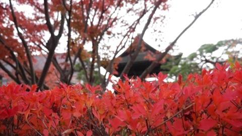 【信州弾丸ツアー1日目】善光寺周辺でぷらぷら