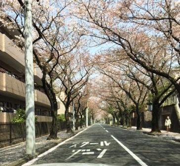 18sakuraazami0403_2917[1]