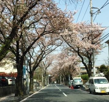 18sakuraazami0403_2919[1]