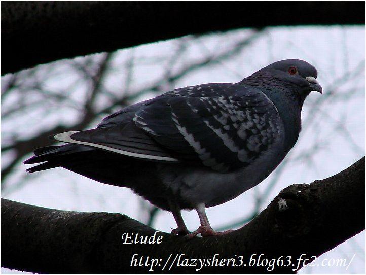 20070304-6.jpg
