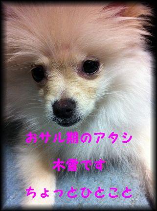 koyuki20170919.jpg
