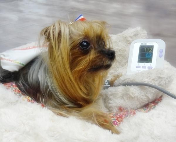 パコと血圧計20180513
