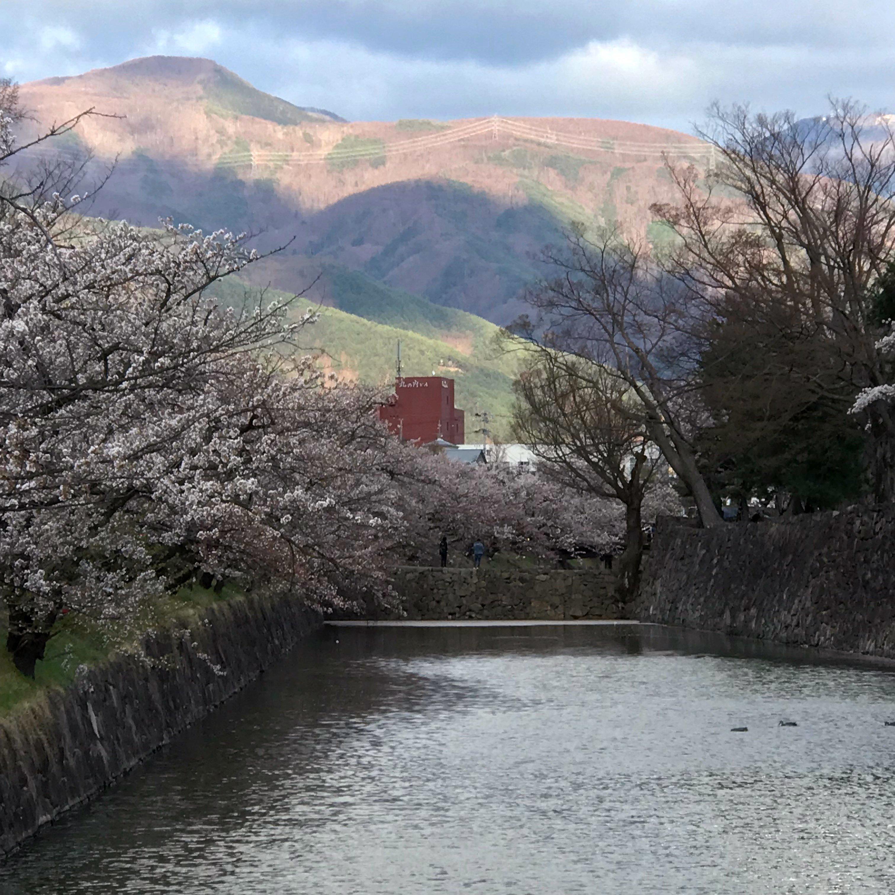 運よく松本城の桜を観ることがで...