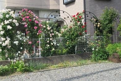 バラの綺麗なお宅