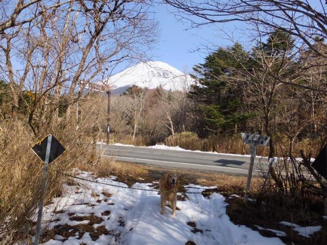 須山口登山道2018.3.31 169