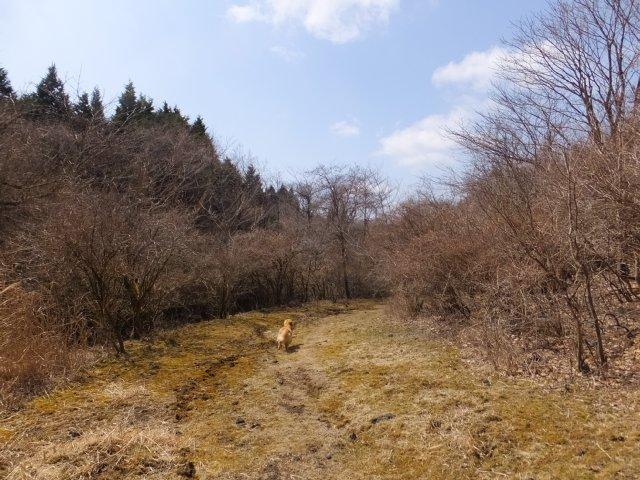 須山口登山道2018.3.31 224