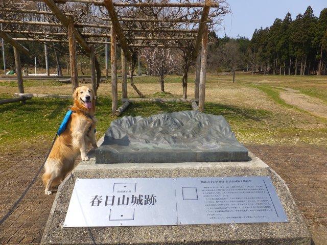 春日山城跡2018.4.1 005