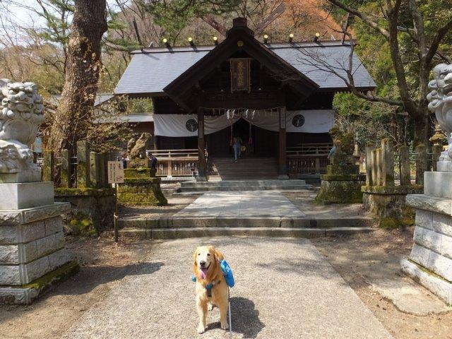 春日山城跡2018.4.1 026