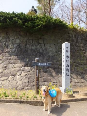 春日山城跡2018.4.1 029