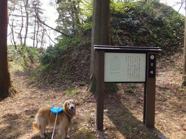 春日山城跡2018.4.1 038