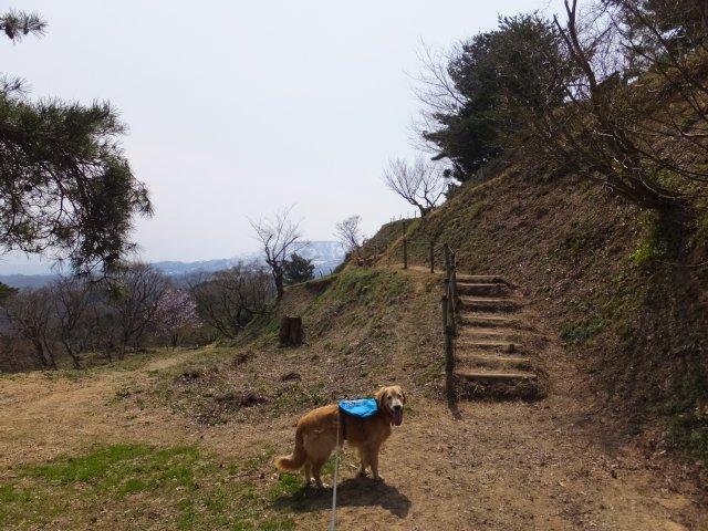 春日山城跡2018.4.1 052