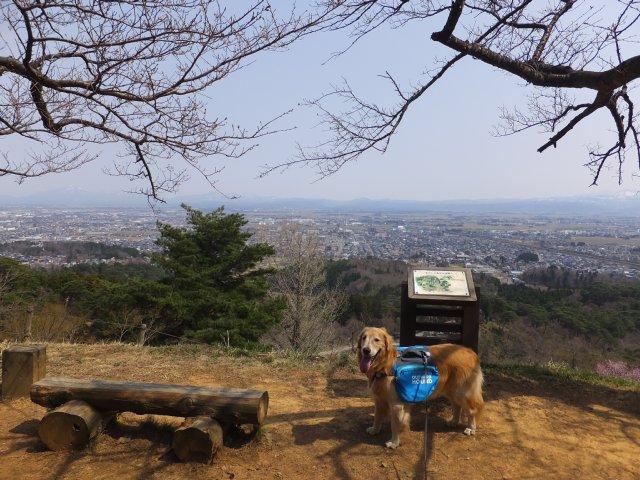 春日山城跡2018.4.1 057