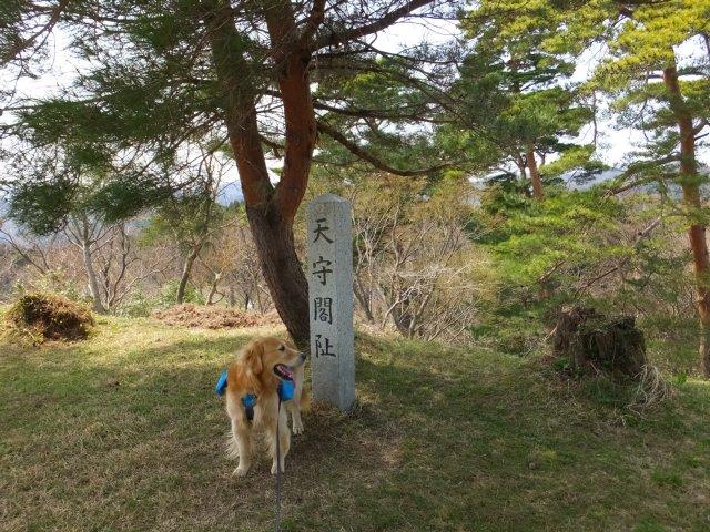 春日山城跡2018.4.1 058