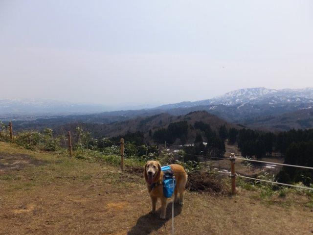 春日山城跡2018.4.1 060