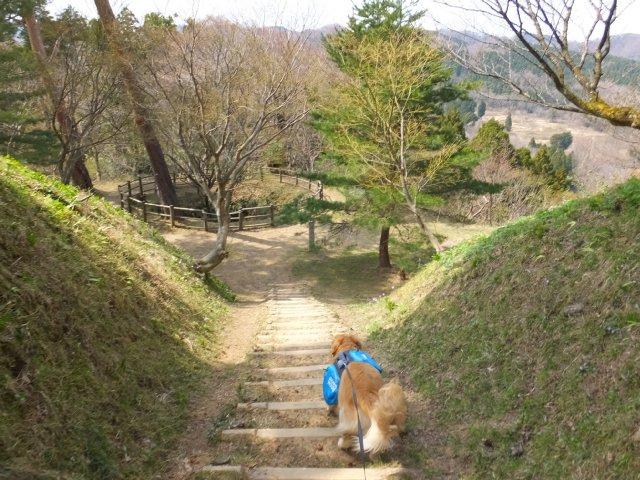 春日山城跡2018.4.1 061