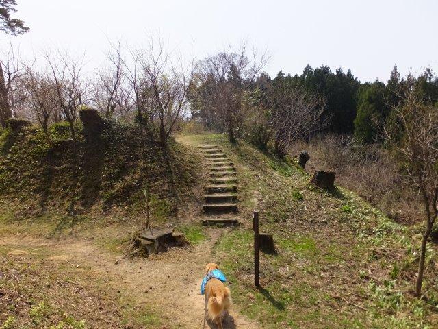 春日山城跡2018.4.1 069