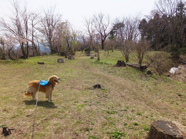 春日山城跡2018.4.1 073