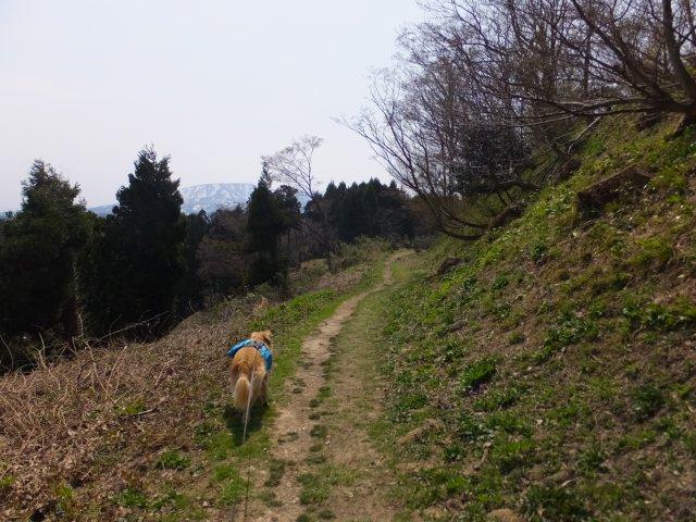 春日山城跡2018.4.1 077