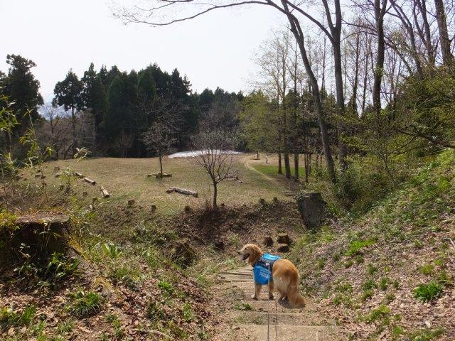 春日山城跡2018.4.1 078