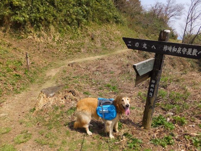 春日山城跡2018.4.1 080