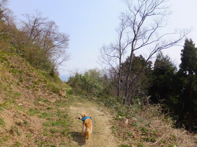 春日山城跡2018.4.1 082