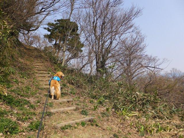 春日山城跡2018.4.1 083