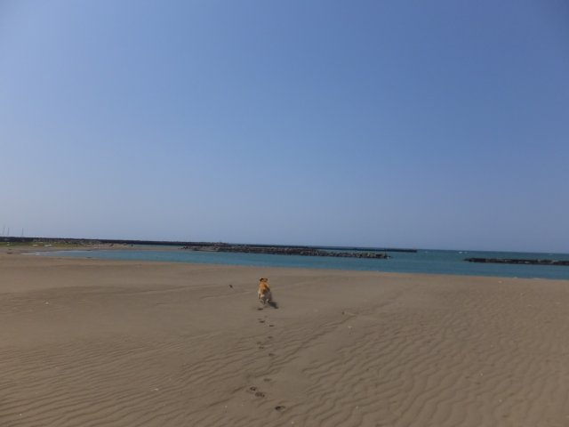 西番神海水浴場 2018.5.5 037