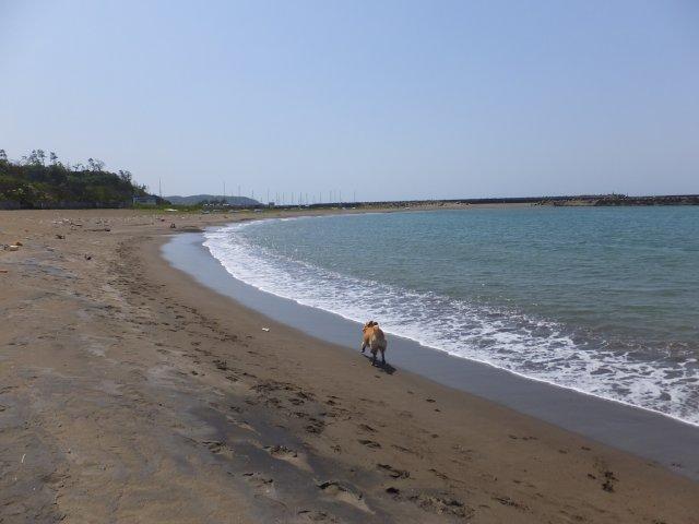 西番神海水浴場 2018.5.5 041