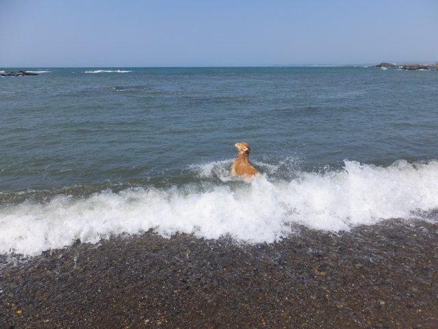 西番神海水浴場 2018.5.5 083