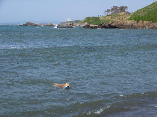 西番神海水浴場 2018.5.5 106
